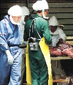 At the height of the 1999 outbreak in Bukit Pelanduk, Negri Sembilan, medical and veterinary scientists conducting an autopsy on a pig were forced to wear biohazard suits because of Nipah's lethal virulence- STAR Online